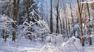 snowpresents
